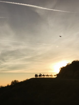 Horses in the Hollywood hills at sunset